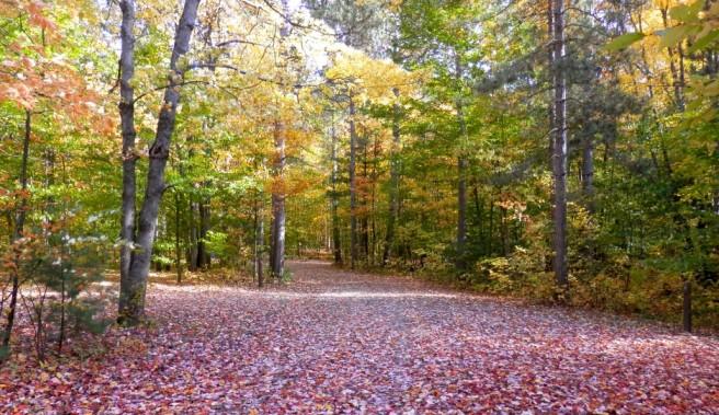 cropped-leaves-on-trail-68.jpg