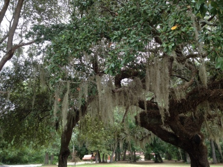 A stand of old live oak trees graces the grounds at Copper Possum.