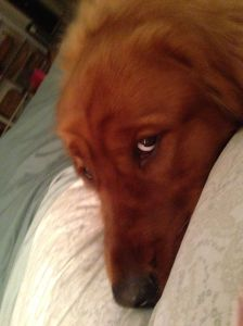 copper gaze on bed