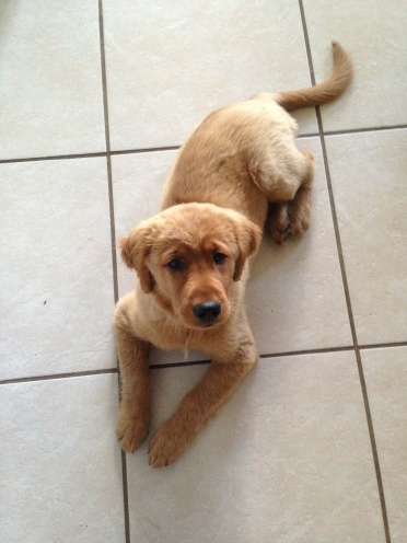 Copper on tile age 3 months