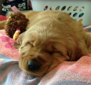 sleepy baby Copper