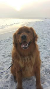 Copper at the beach